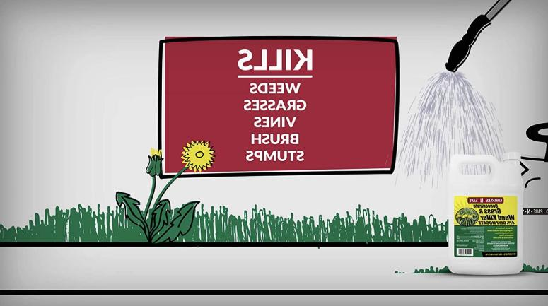 Grass Weed Concentrate 41 Percent Glyphosate